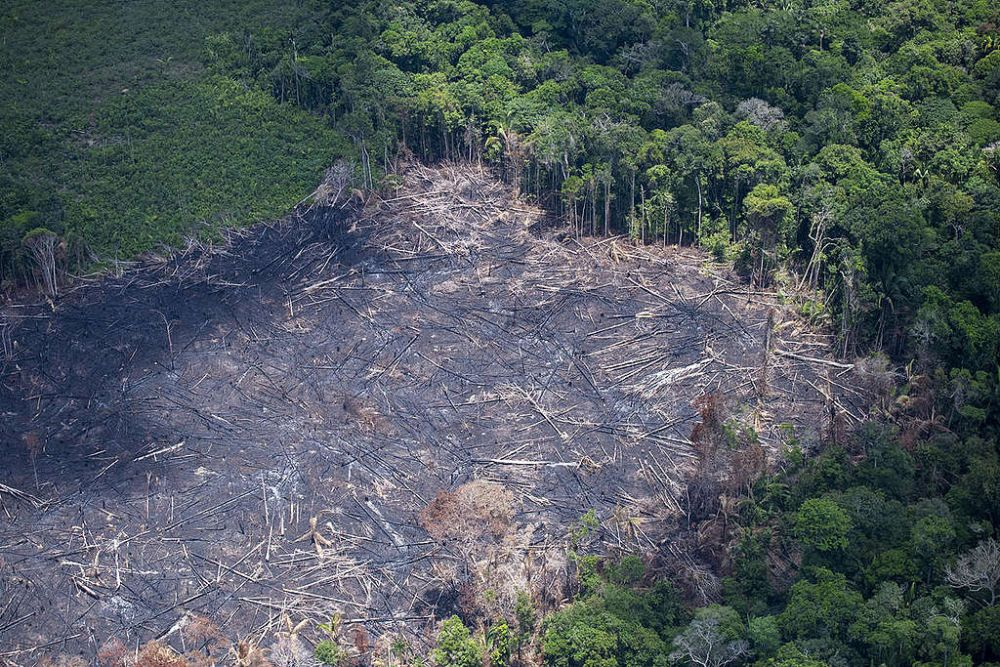 Deforestation Rates In Amazon Rainforest Highest In A Decade